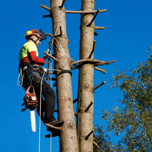 Google Ads for Tree Service Companies